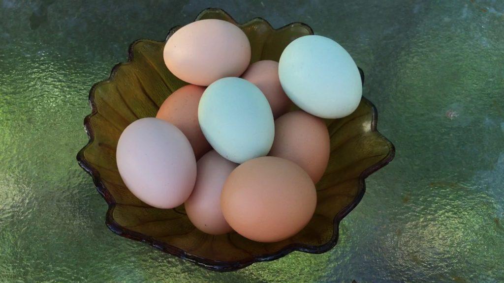 Разноцветные яйца пасхальных кур