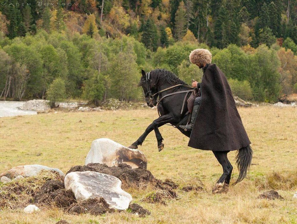 Результатом храбрости и преданности карачаевских лошадей стало резкое сокращение их поголовья