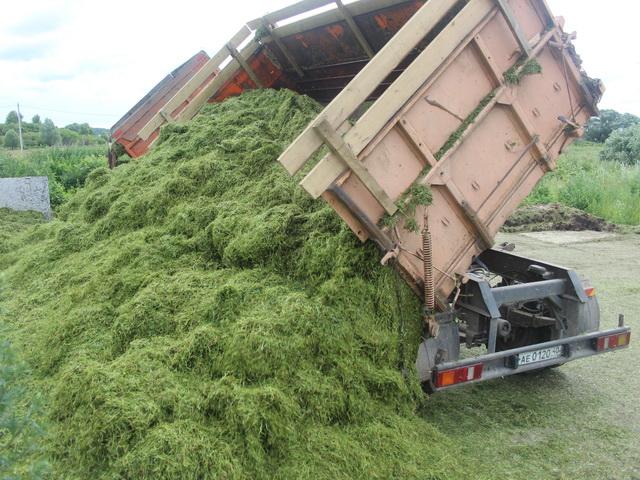 Сенаж поможет курдючным овцам справиться с нехваткой свежей травы в холодный период