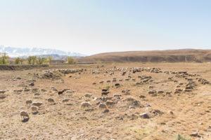 Скудные степи и горные хребты являются основными местами обитания курдючных овец