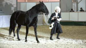 Современные подвиды карачаевских лошадей происходят от линий, выведенных еще в начале двадцатого века