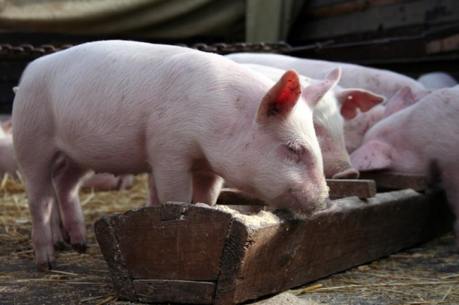 Экономия на корме может привести лишь к расстройствам желудка у животных