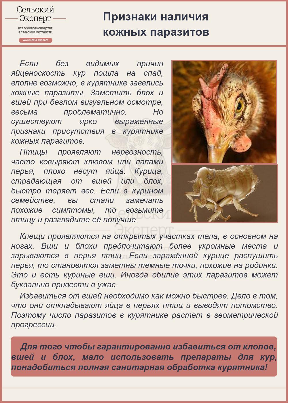 Признаки наличия кожных паразитов