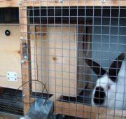 Устанавливаем маточник внутрь клетки для кроликов