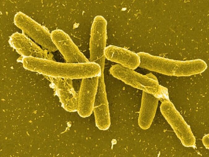 Бактерии сальмонеллы легко передаются человеку при контакте с зараженными птицами