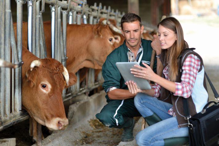 В данные, собираемые комиссией, входят информация о годовом производстве молока, осеменении, забоях и т.д.