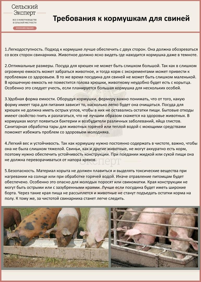 Требования к кормушкам для свиней
