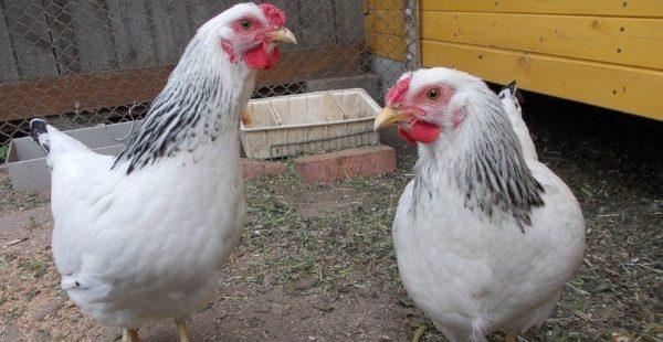 Внешность первомайских птиц привлекает внимание
