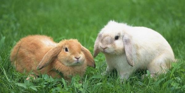 Профилактическая гельминтализация – отличная мера сохранения здоровья животного