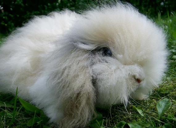 Ворсистый кролик-баран