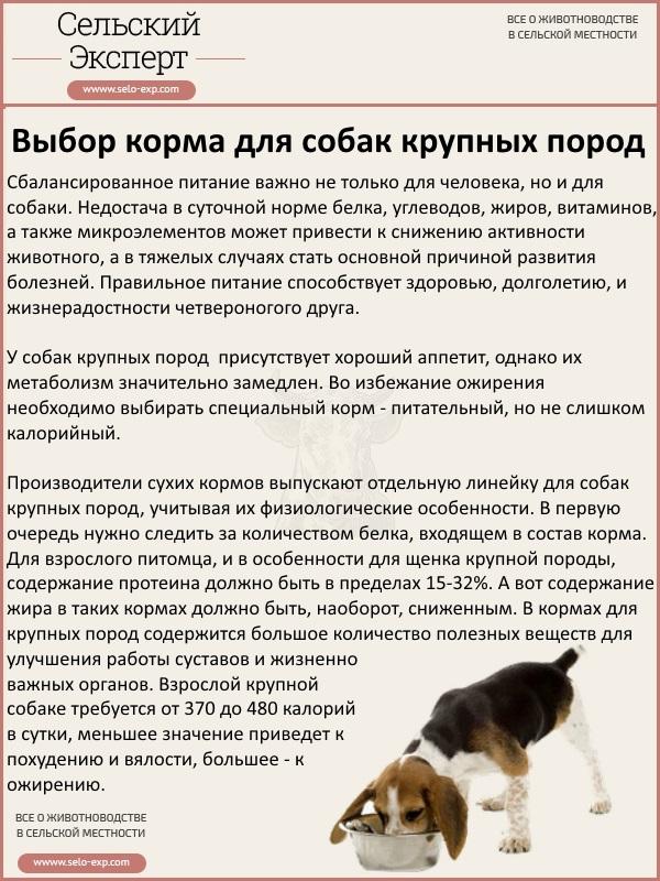 Выбор корма для собак крупных пород