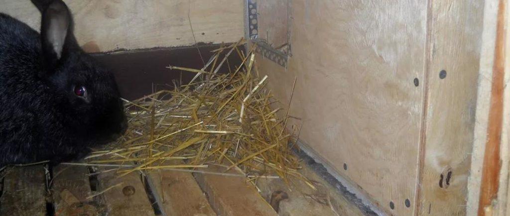 В качестве подстилки используют сено