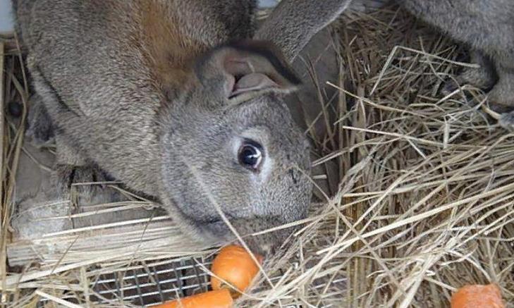 В холода кроликов необходимо обеспечить усиленным питанием
