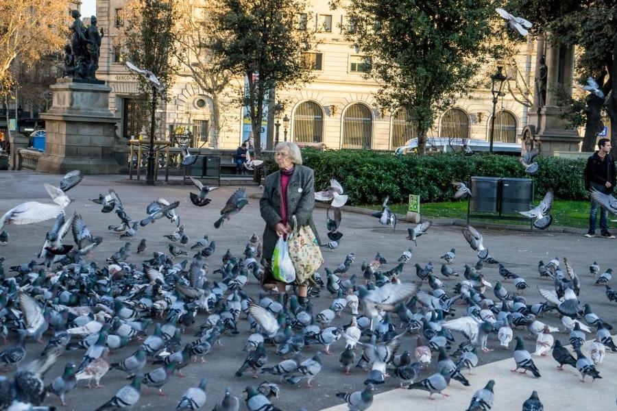 Голуби - неотъемлемая часть экосистемы больших городов