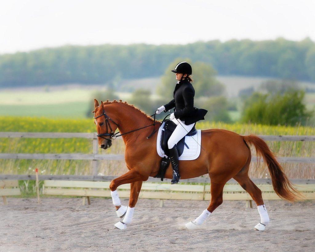 Конный спорт сильно изнуряет организм животного