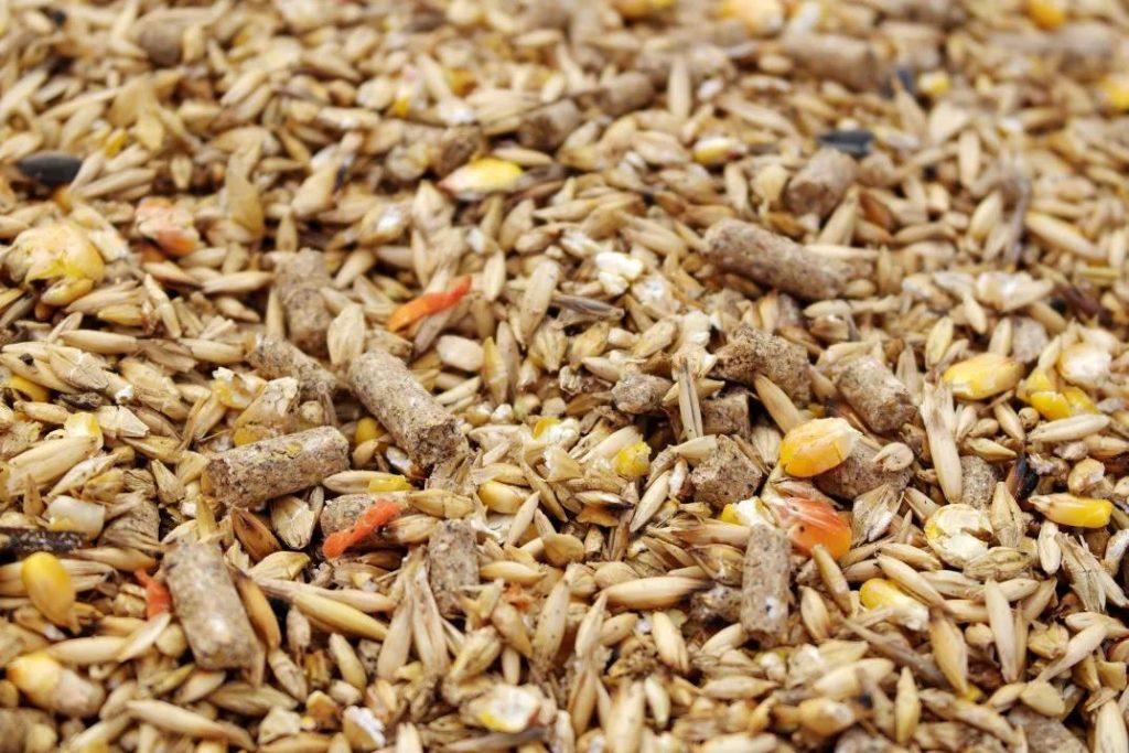 Кроликам можно давать комбинированные зерновые смеси