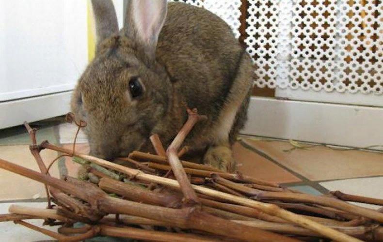 Кролики охотно употребляют ветки