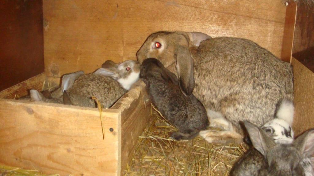Крольчиха с приплодом