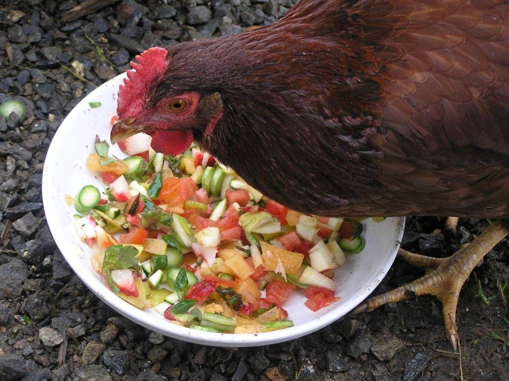 Кур можно кормить овощами