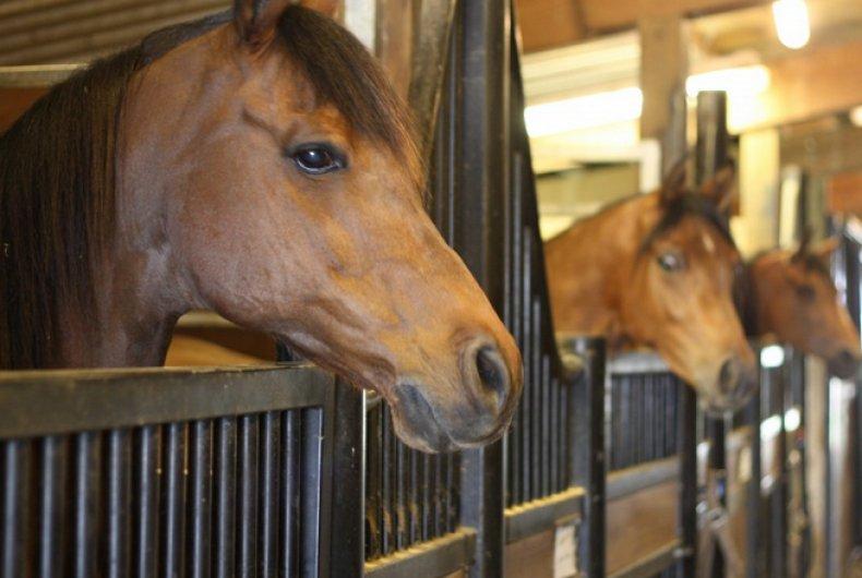 Лошади в стойлах