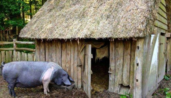 Любой сарай станет временным жилищем для животных