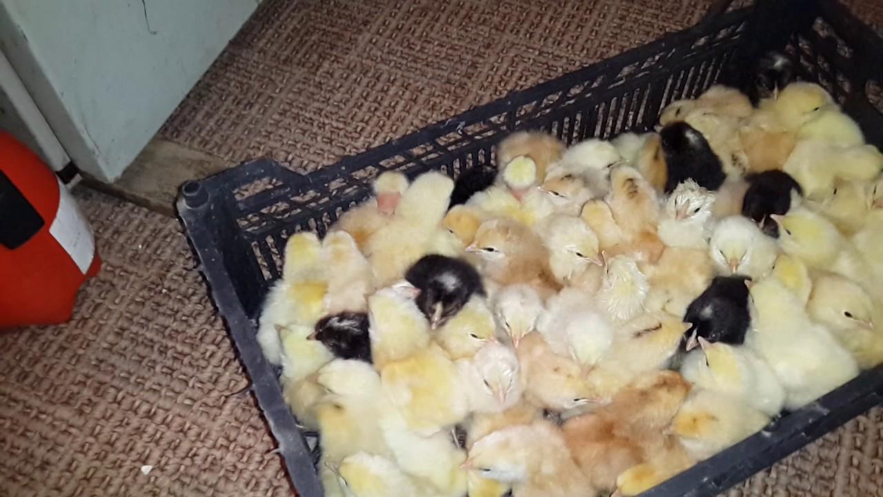 Маленьким птенцам должно быть тепло