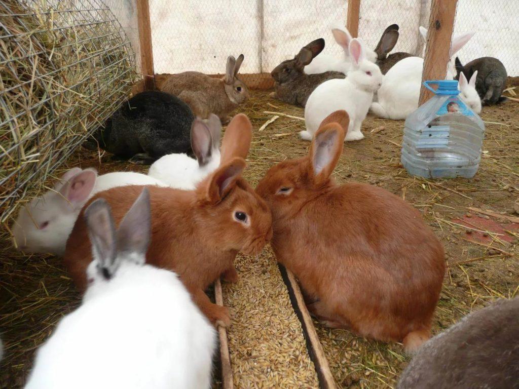 Массовое заражение часто наблюдается при содержании животных в тесном вольере