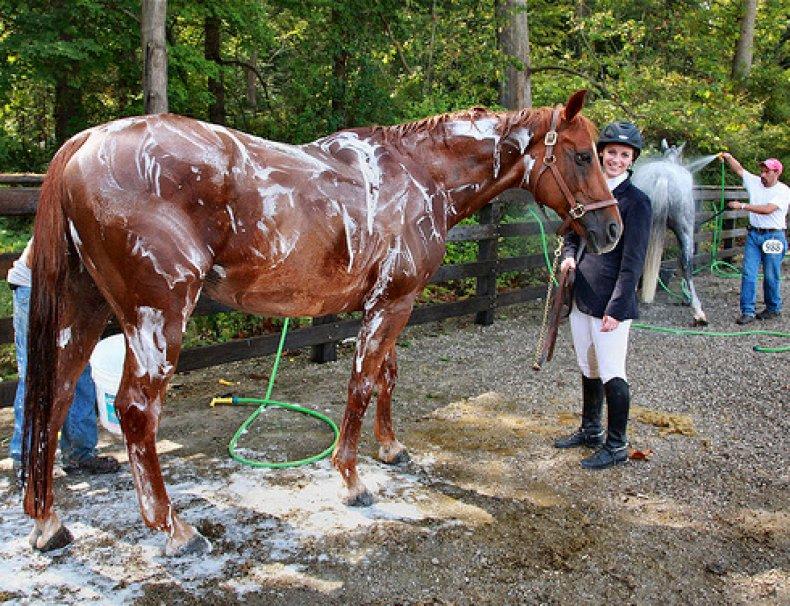 Намыленная лошадь