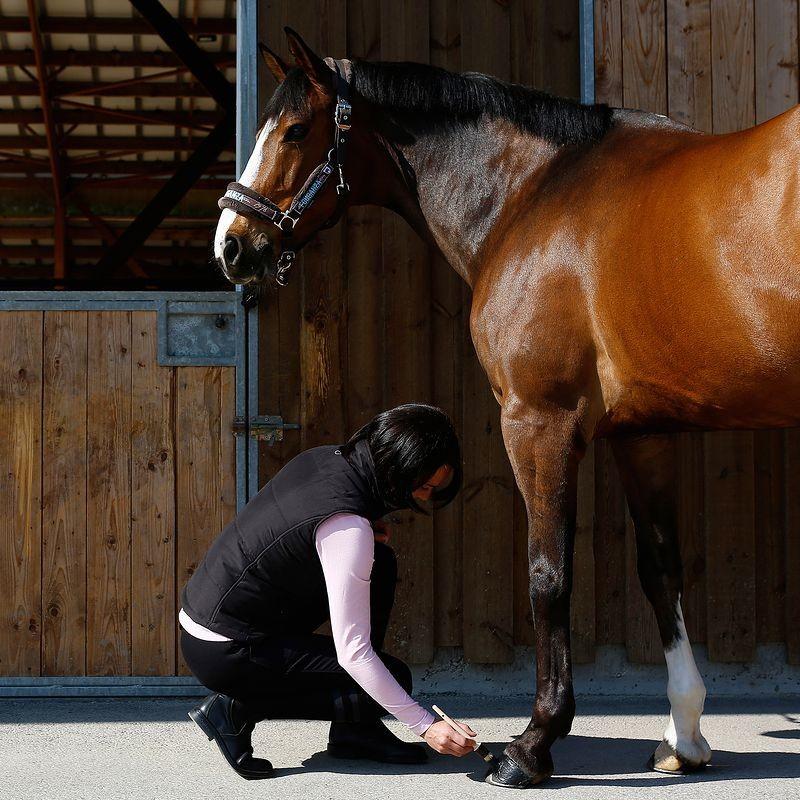 Нужно заботиться о копытах лошадей