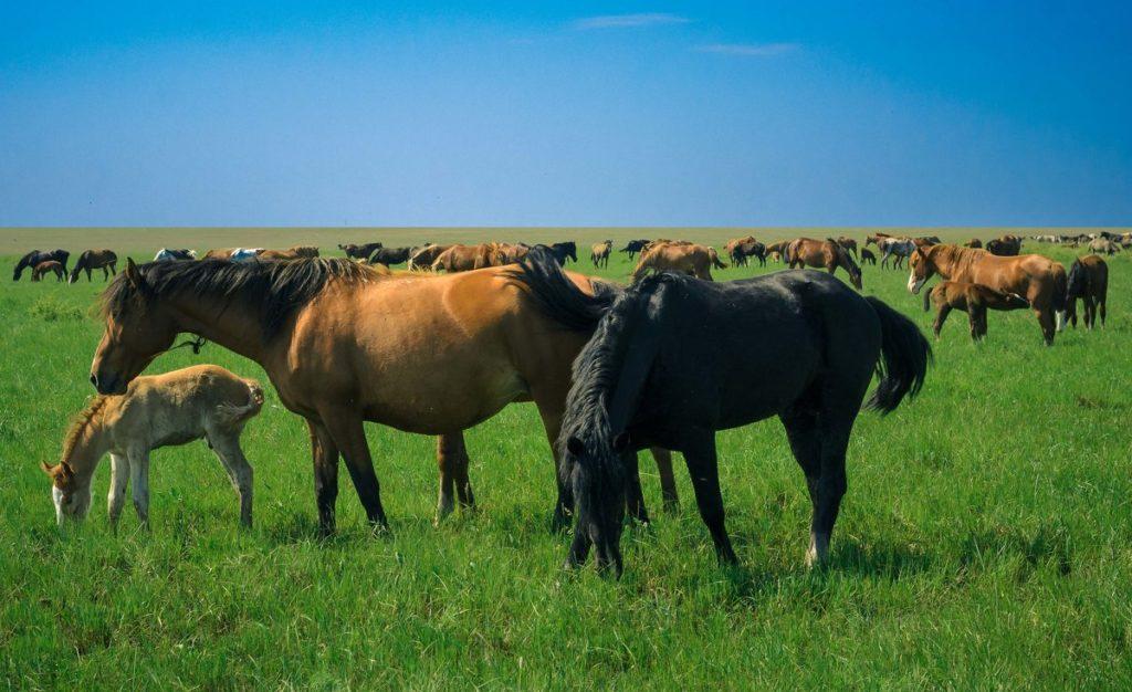 Пастбище для лошадей
