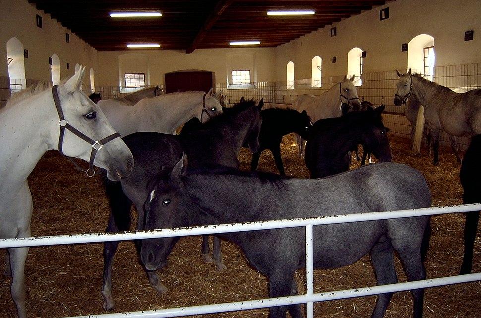 Помещение для группового содержания лошадей