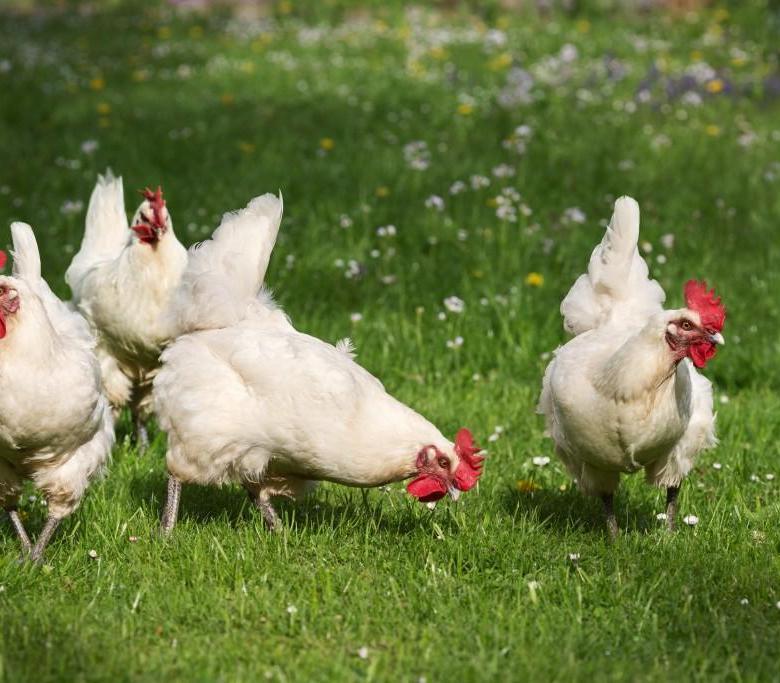 Почаще выгуливайте птиц – трава и свежий воздух очень полезны для их здоровья