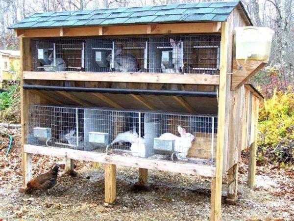 Пример расположения кроликов в шедовой постройке