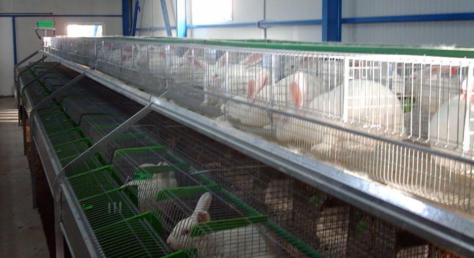 Промышленная ферма