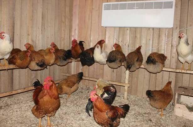 Птицам должно быть комфортно в помещении