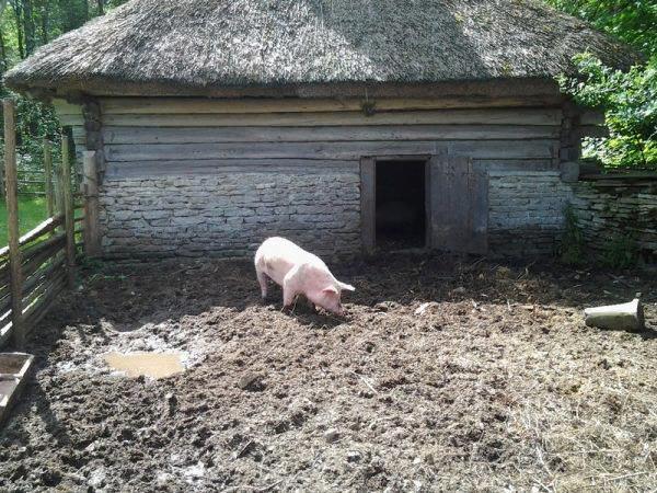 Свинарник строят в удаленности от домов