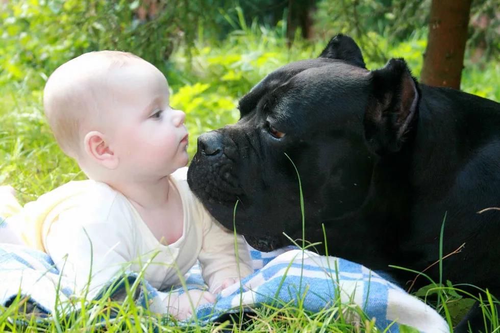 Собаки дружелюбно реагируют на детей