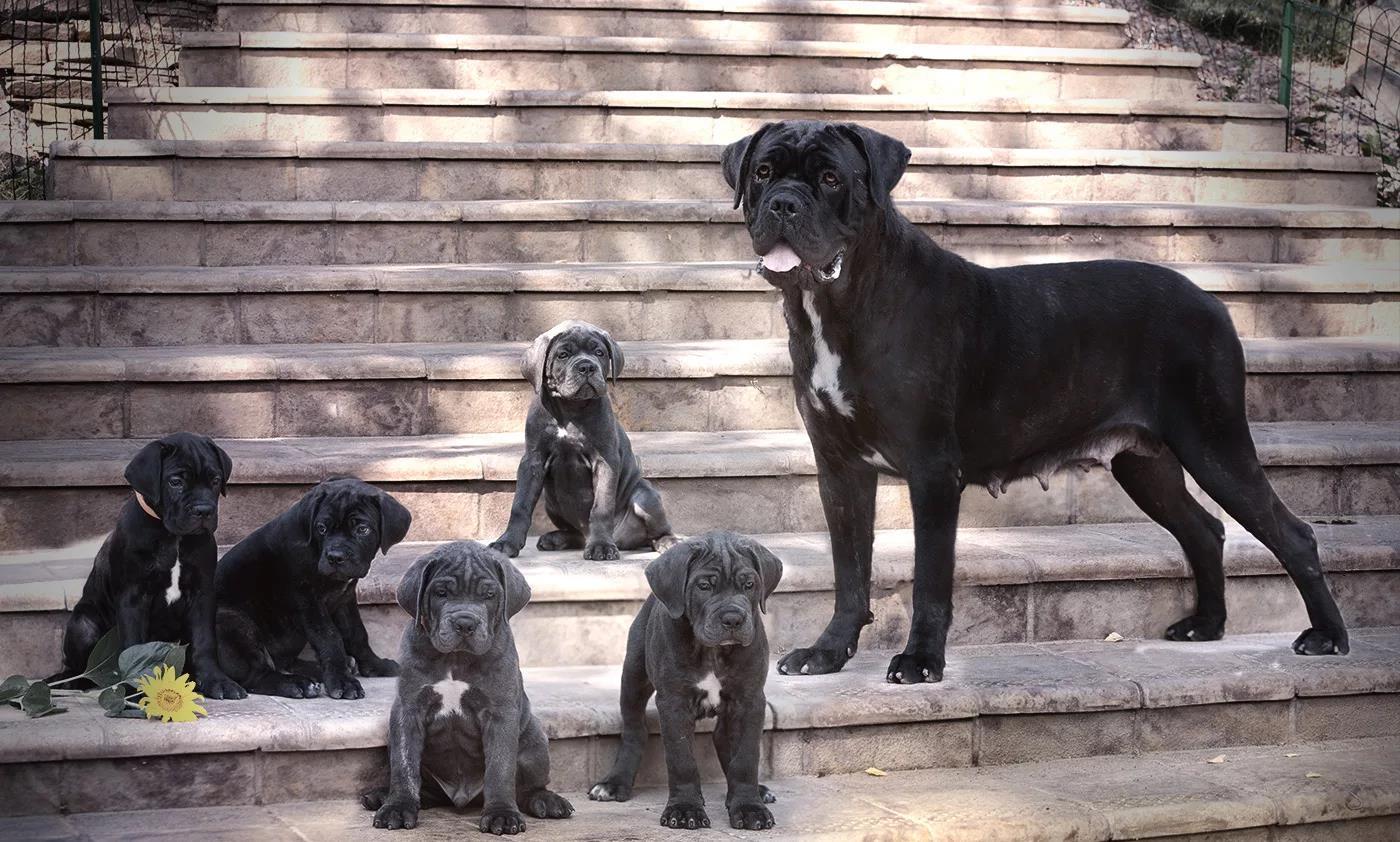 Собаки нуждаются в качественном уходе независимо от возраста