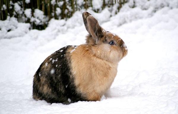 Как ухаживать за домашним кроликом зимой