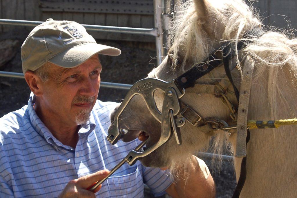 Уход за зубами – необходимая вещь в заботе о лошадях
