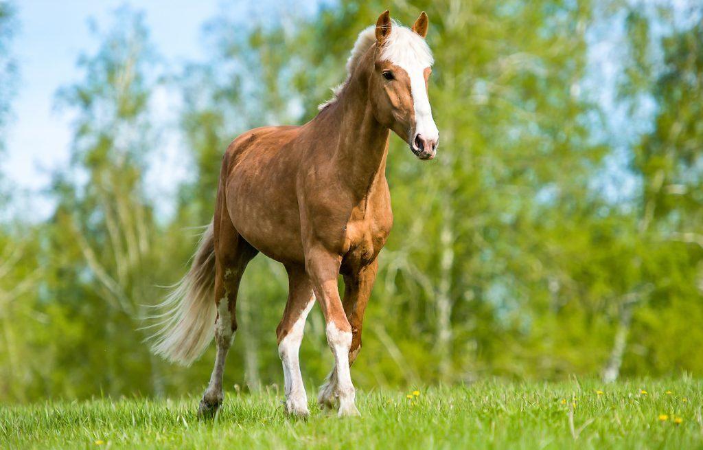 Ухоженное животное проживет долгую и счастливую жизнь