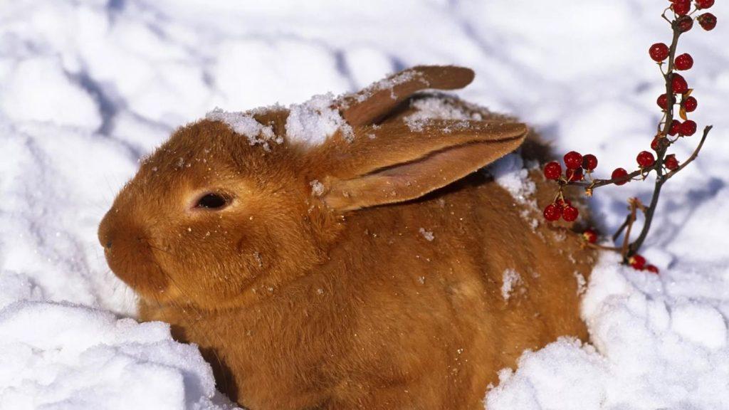 У зимних особей формируется крепкий иммунитет