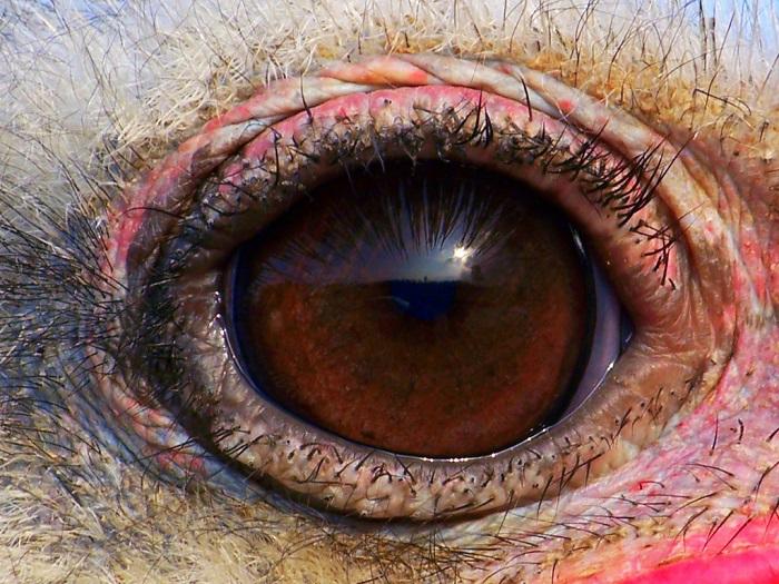 У страусов огромные глаза