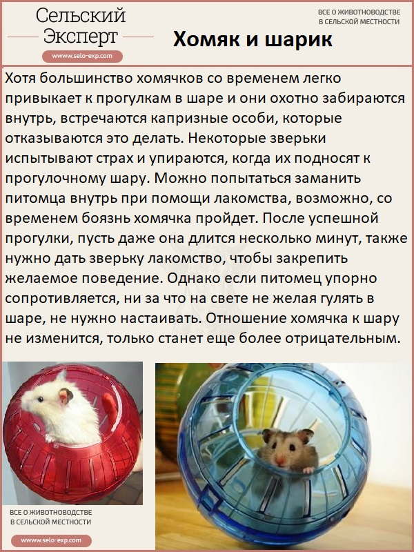 Хомяк и шарик