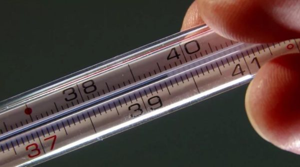 Высокая температура - повод вызвать ветеринара