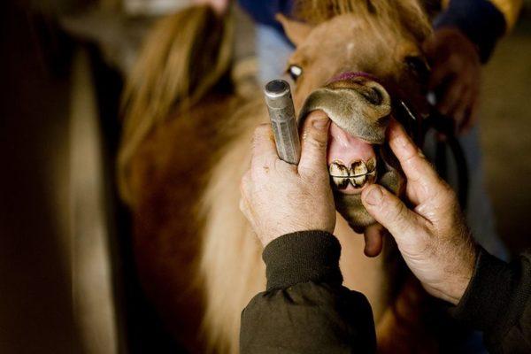 Лошадку регулярно нужно осматривать на предмет болезней