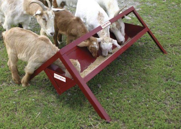 Металлическое корыто - самый удобный и устойчивый вариант для козлят