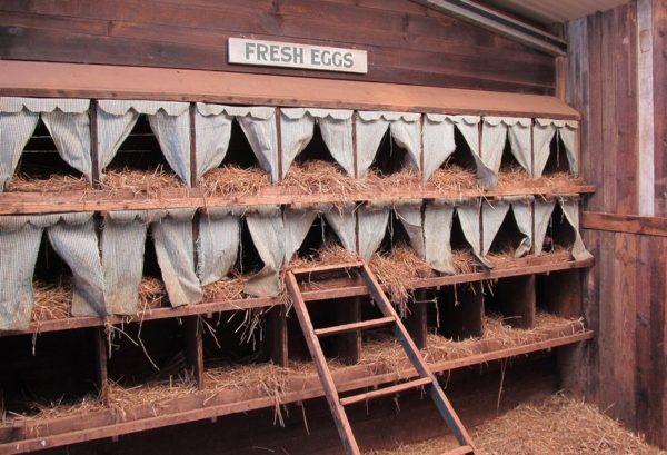 Пример гнезда для несушек