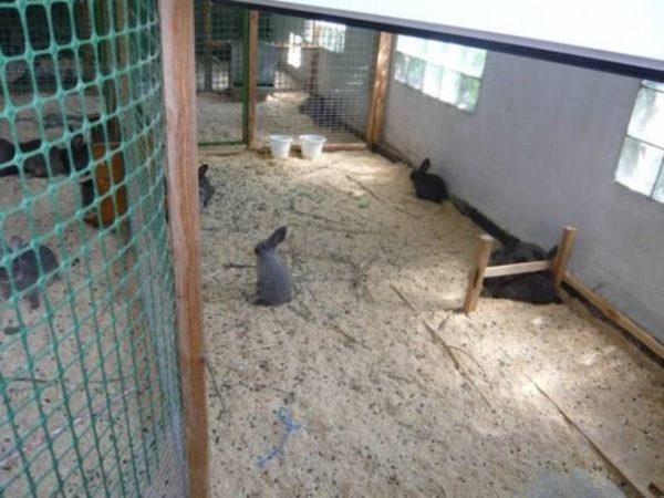 Для вольерного типа выращивания кроликов требуется более внимательное отслеживание жизнедеятельности особей