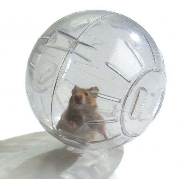 Хомяку в прозрачном шаре будут видны все уголки квартиры